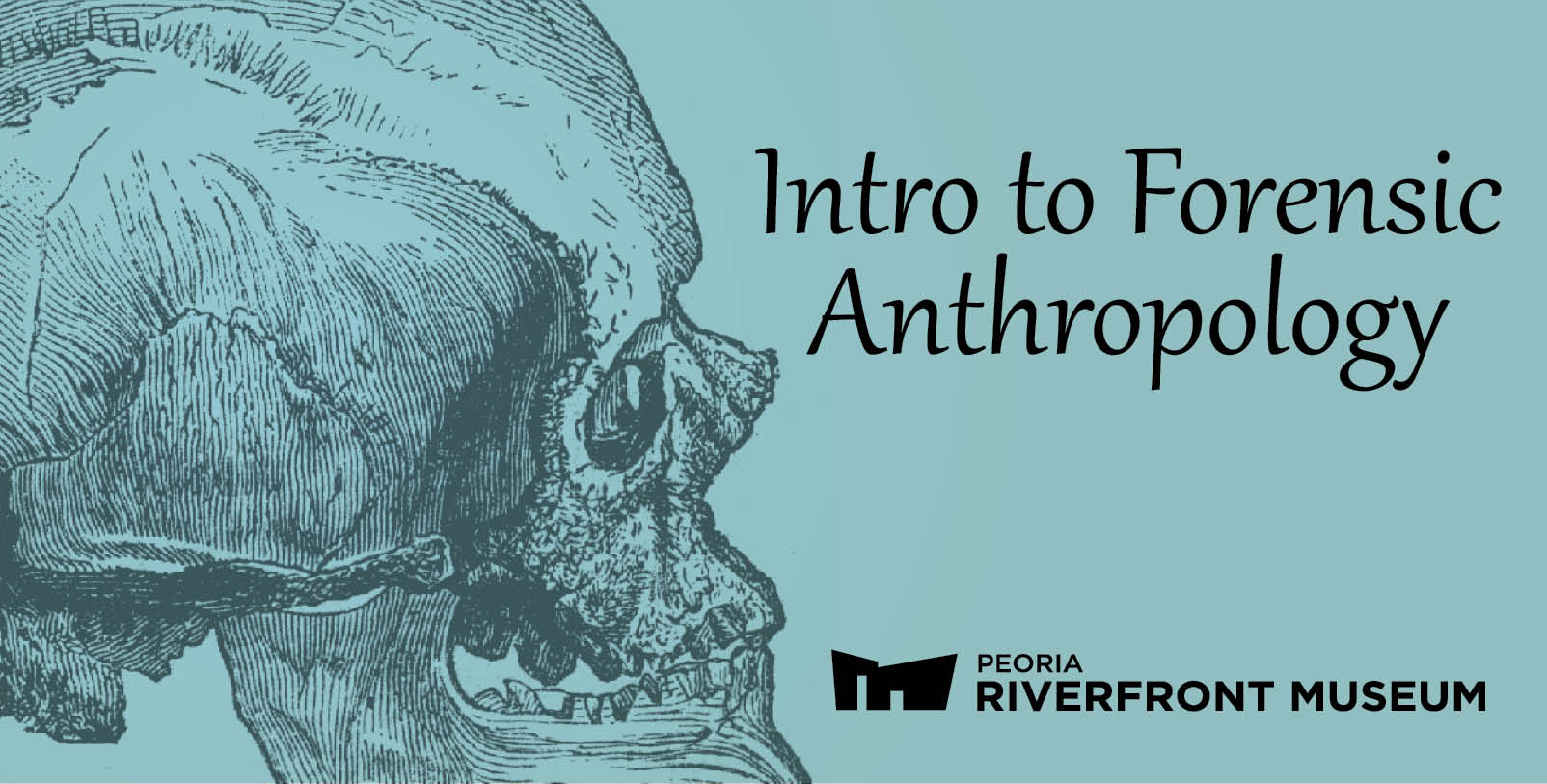 Intro Anthropology Web Banner